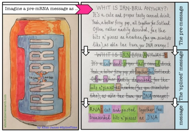 Irn bru research